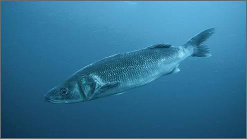 https://admin.seafood.media/cm/photolib/images/download/65182_494x278_72_DPI_0.jpg