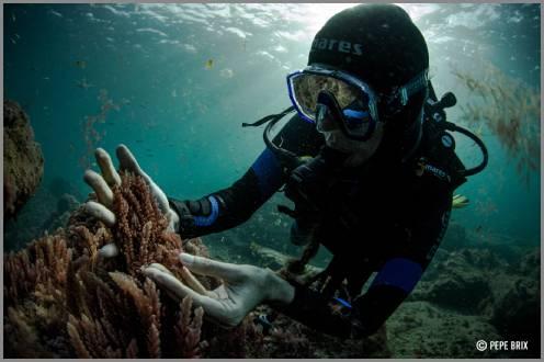 https://admin.seafood.media/cm/photolib/images/download/65559_496x330_72_DPI_0.jpg