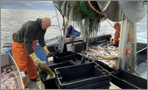 https://admin.seafood.media/cm/photolib/images/download/65597_496x302_72_DPI_0.jpg