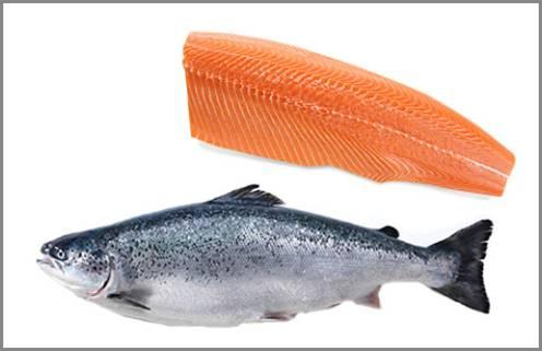 https://admin.seafood.media/cm/photolib/images/download/65706_496x321_72_DPI_0.jpg