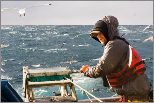 https://admin.seafood.media/cm/photolib/images/download/65753_496x334_72_DPI_0.jpg