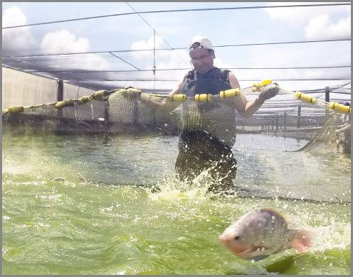 https://admin.seafood.media/cm/photolib/images/download/65770_496x390_72_DPI_0.jpg