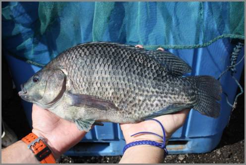 https://admin.seafood.media/cm/photolib/images/download/65772_496x333_72_DPI_0.jpg