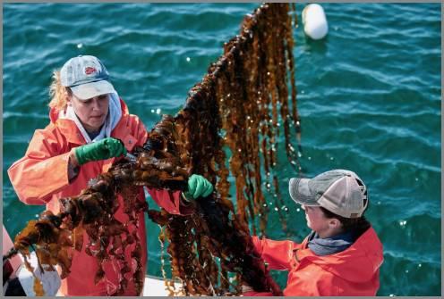 https://admin.seafood.media/cm/photolib/images/download/65830_496x335_72_DPI_0.jpg